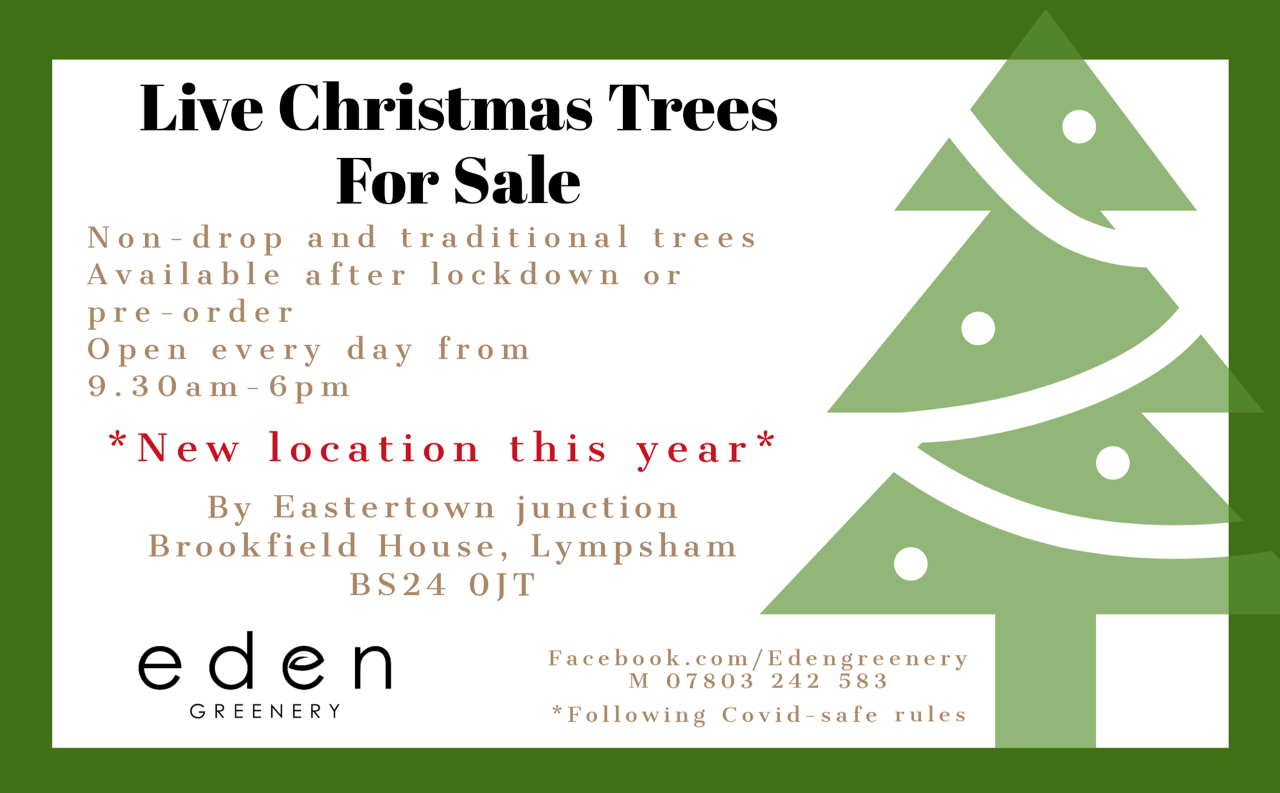 Christmas Trees at Eden Greenery from Dec. 1st