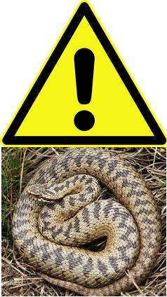 Warning Adders active on Hellenge Hill